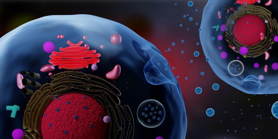 Illustrasjonsbilde av eksosomer